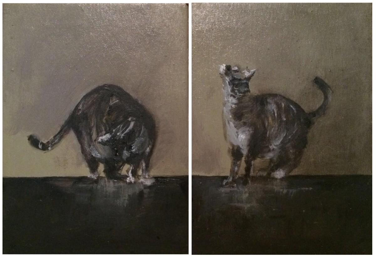 Gatos costanza alvarez de castro for Alvarez de castro